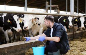 agriculture et mentorat