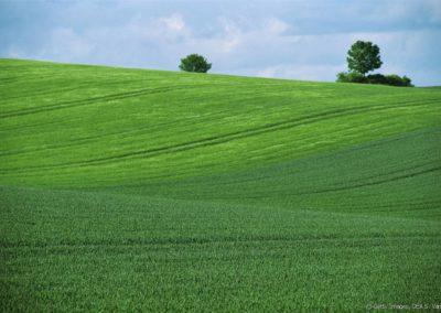 Le Mentorat : une solution pour valoriser les compétences des seniors dans le monde agricole